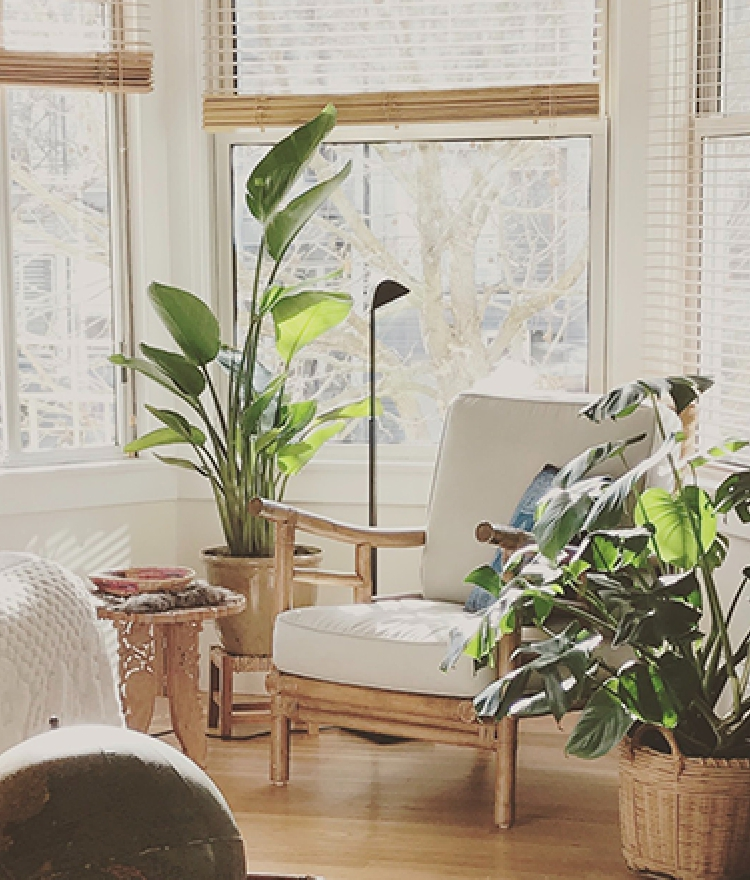The Best Houseplants for Your Bedroom According to NASA